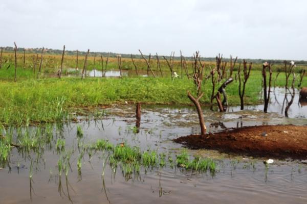 الزراعة المطرية أمل السكان ورأس حربتهم في مواجهة شح الظروف وغياب الدعم